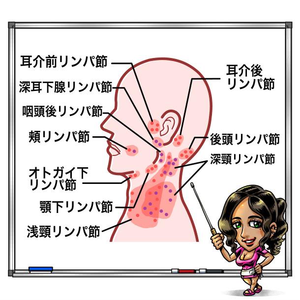リンパの解説イラスト②