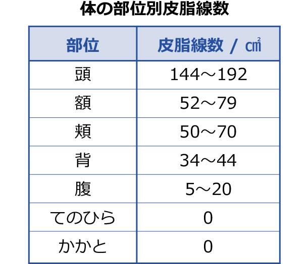 体の部位別皮脂腺数