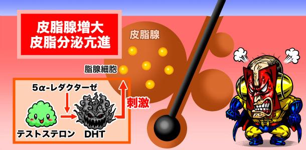 ジヒドロテストステロンの影響