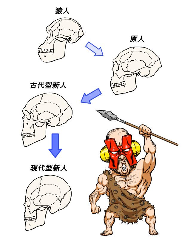 頭蓋骨の進化の歴史イラスト