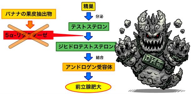 前立腺肥大のメカニズムとバナナ果皮抽出物の作用