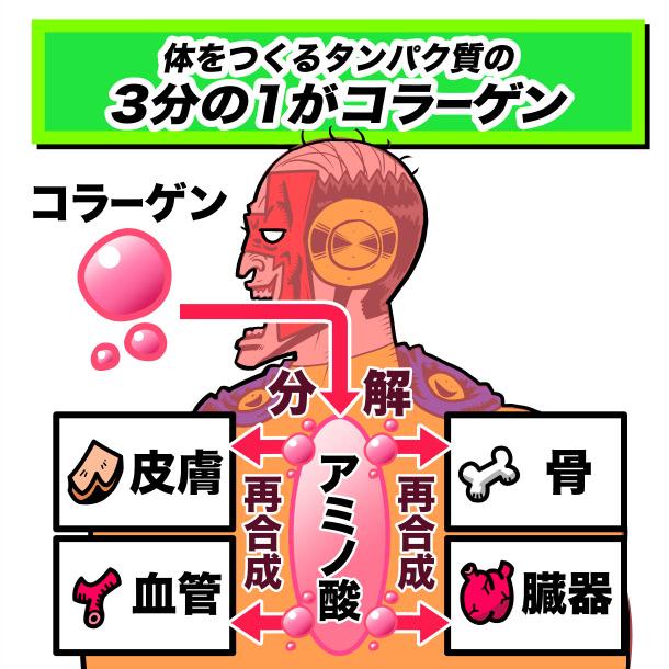 たんぱく質の3分の1がコラーゲン