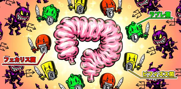 乳酸菌H61