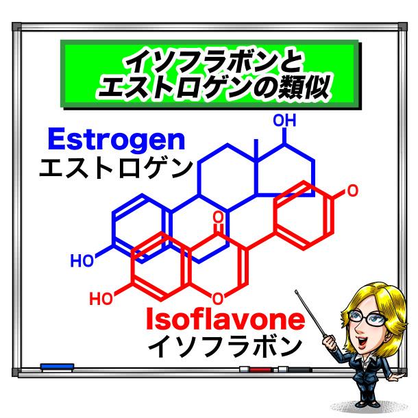 イソフラボンとエストロゲンの類似解説イラスト