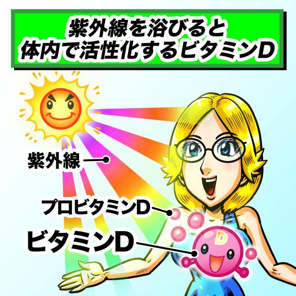 紫外線を浴びると体内で活性化するビタミンD