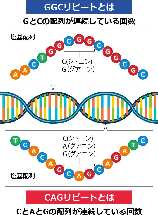 薄毛に関する遺伝子の解説イラスト